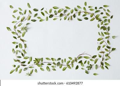 Photos Images Et Photographies De Stock De Dessin Plante