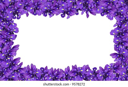 The rectangular framework made of dark blue irises on a white background