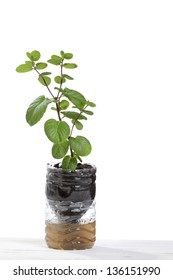 recycle of a plastic bottle as a flowerpot isolated on white