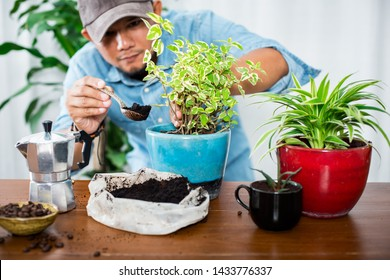 Recycle used coffee grounds, using used coffee grounds as fertilizer.