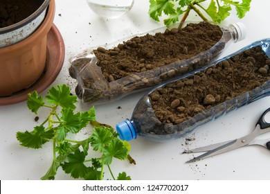 Recycled Plastic Bottle Gardening. Top view of plastic bottl filled with soil, to plant plants or vegetables inside. DIY gardening, crafts ideas