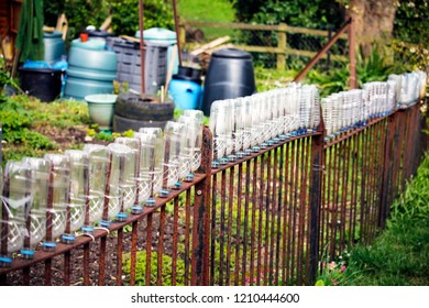 Recycled plastic bottles on a garden fence.