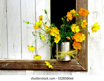 Recycled tin with yellow cosmos. Yellow cosmos in a recycled can on a semi closed window.