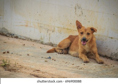 Red abandoned homeless stray dog is lying in the street. Little sad abandoned dog on footpath. Lonely homeless stray dog is laying at urban road.
