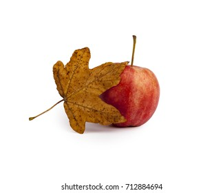 A red able with a leaf,autumn