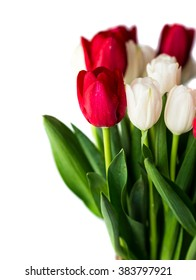 Red add white tulips in a vase