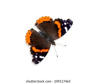 Red Admiral butterfly (Vanessa atalanta) on white background
