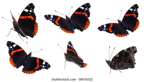 The red Admiral (Vanessa atalanta) in various positions, isolated on white