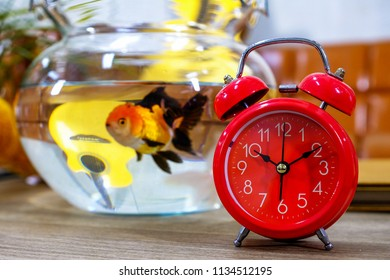 Red alarm clock with goldfish in a dozen glasses on a wooden table.