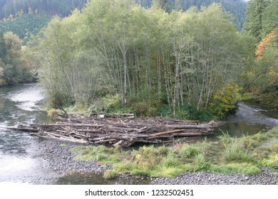 Red alder and McKenzie River, Aufderheide National Scenic Byway, Willamette National Forest, Oregon, USA