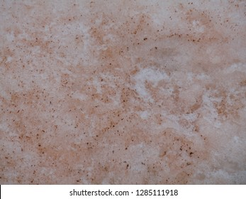 Red algae in ice snow texture background