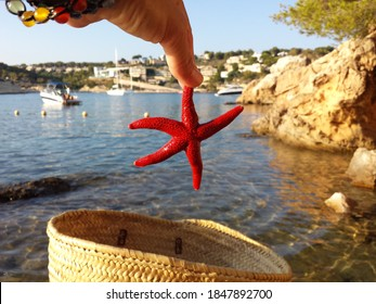Red alive starfih in the hand on the seashoe. Mallorca. Spain.