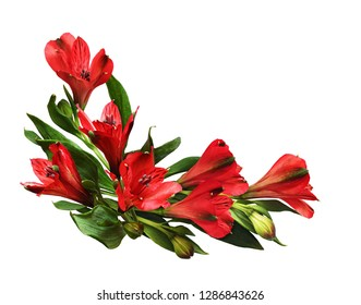Red alstroemeria flowers in a corner arrangement isolated on white background