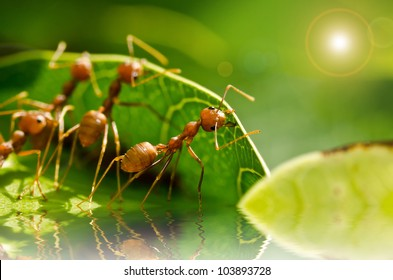 red ant team work building home