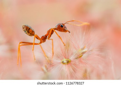 Red ants Pink background