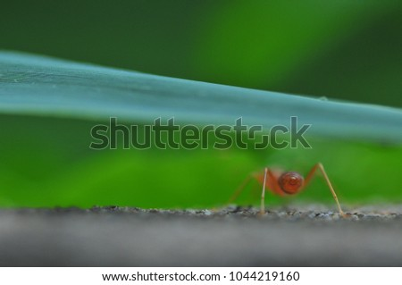 Red Ants Working Stock Photo Edit Now 1044219160 Shutterstock