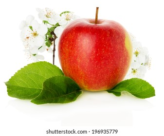 red apple with blossom on the white background
