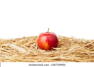 Red apple fruit on yellow hay straw grass isolated on white background