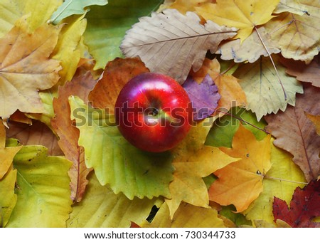 A red apple lies on the autumn leaves. Leaf fall. Contrast. Autumn. October. Background of leaves. Green, red, yellow and orange colors.
