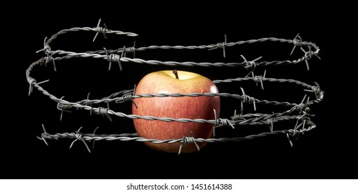 Red apple locked in barbed wire. Lust and temptation concept. Studio shoot. Isolated on black background.