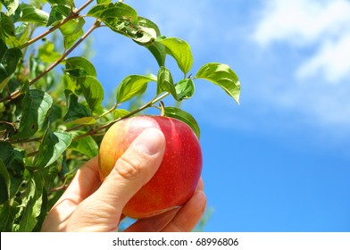 red apple on tree and hand showing healthy food concept