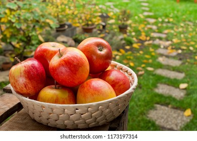 Red apples in the basket in the garden