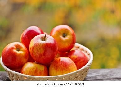 Red apples in the basket in garden