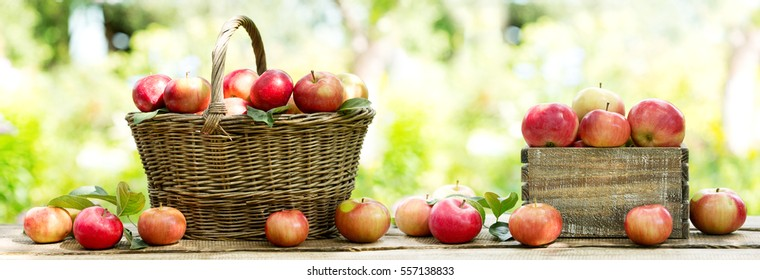 red apples in a basket on wooden table on green background, banner