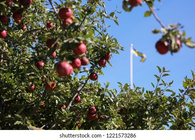 Red apples, blue sky and the swedish flag.