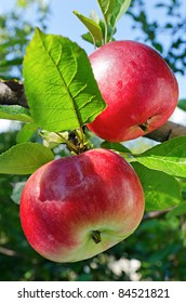 Red apples grow on a branch against the blue sky