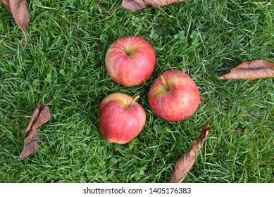 Red apples on the grass.  Autumn background.