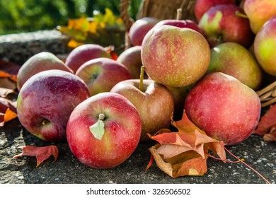 Red apples rolling out of the basket on rustic stone background with autumn leaves. Side view