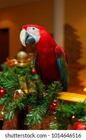Red ara macao. Christmas decor.