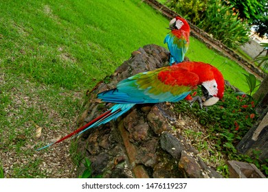 Red arara. colorful Macaw parrot