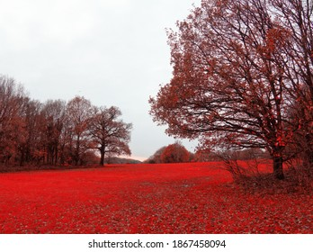 Red autumn enchanting the wood