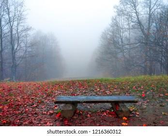 Red autumn fog forest mist bench panorama. Misty forest park bench in autumn fog background. Autumn forest park bench fog. Misty forest park bench in autumn fog