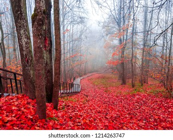 Red autumn forest mist stairway landscape. Autumn red forest stairway view. Forest mist stairway in red autumn season. Red autumn forest mist stairway panorama