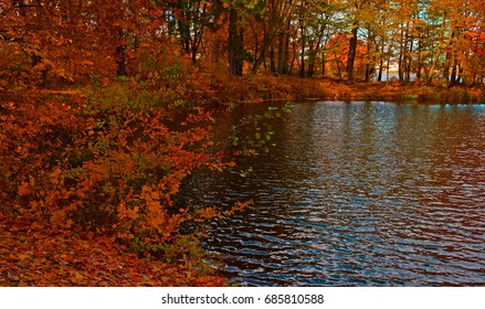 Red autumn forest near the lake