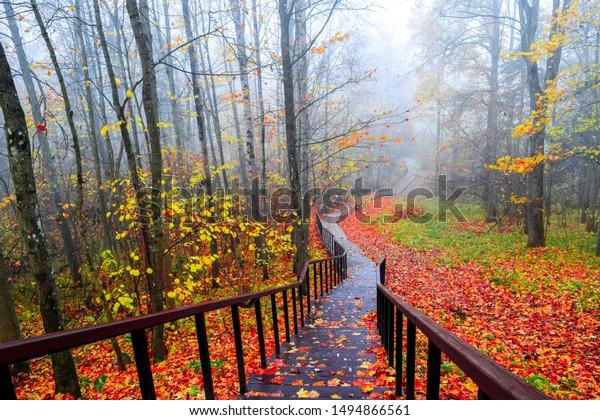 foto de Paysage d'escalier du parc forestier d'automne : photo de stock ...