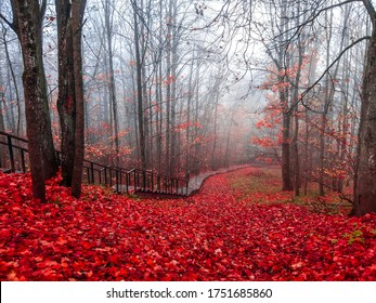 Red autumn forest park stairs. Stair in red autumn forest. Wooden stairs in red autumn forest. Red autumn forest stairs view