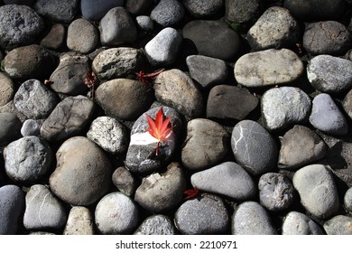 Red Autumn Leaf on Stone Background