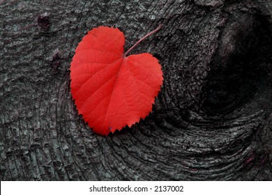 Red Autumn Leaf on Wood