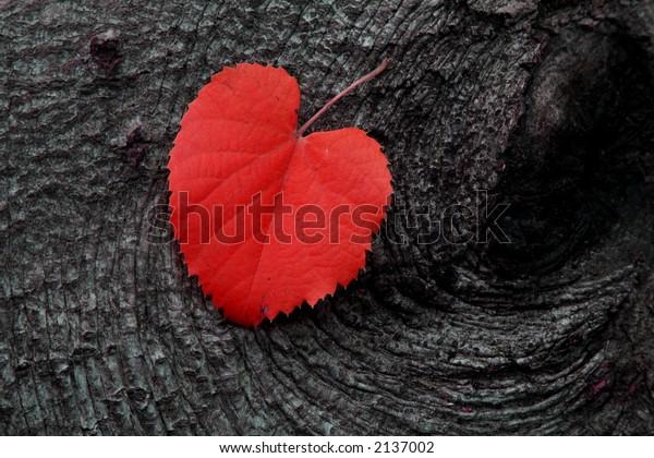 Red Autumn Leaf on Wood
