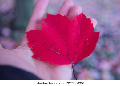 red autumn leaf resting held in hand wating for snow to come
