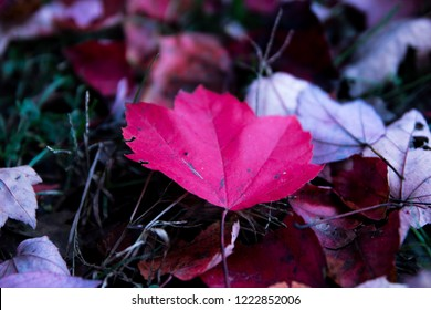 red autumn leaf resting on the floor wating for snow to come