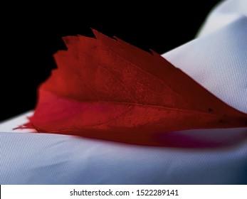 Red autumn leave on white windbreaker