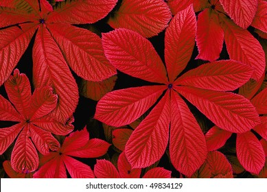 red autumn leaves foliage