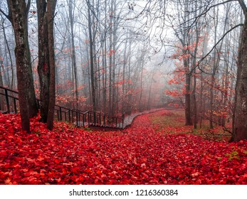 Red autumn mist forest stair way landscape. Autumn forest mist stairway view.  Forest mist stair way in red autumn season. Red autumn fog forest stairway panorama