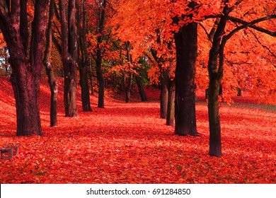 red autumn park as nice natural background