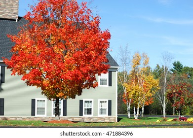 red autumn tree and apartment building